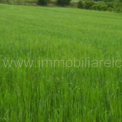 Terreno agricolo seminativo – Azzano Decimo – rif.# IMV-E06/15