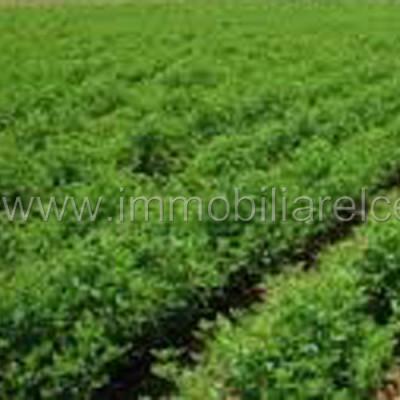 Terreno agricolo seminativo – Azzano Decimo – rif.# IMV-E05/15